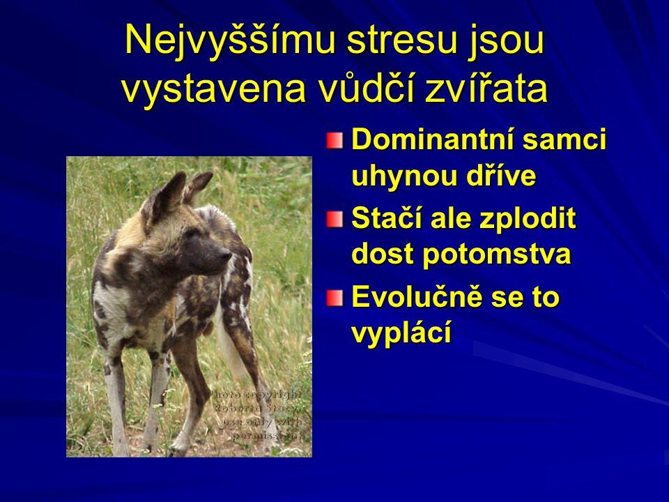 Nejvyššímu stresu jsou vystavena vůdčí zvířata Dominantní samci uhynou dříve Stačí ale zplodit dost potomstva Evolučně se to vyplácí