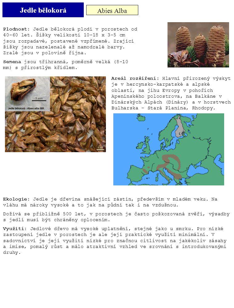 Jedle bělokorá Abies Alba Plodnost: Jedle bělokorá plodí v porostech od 40-60 let. Šišky velikosti 10-18 x 3-5 cm jsou rozpadavé, postavené vzpřímené.