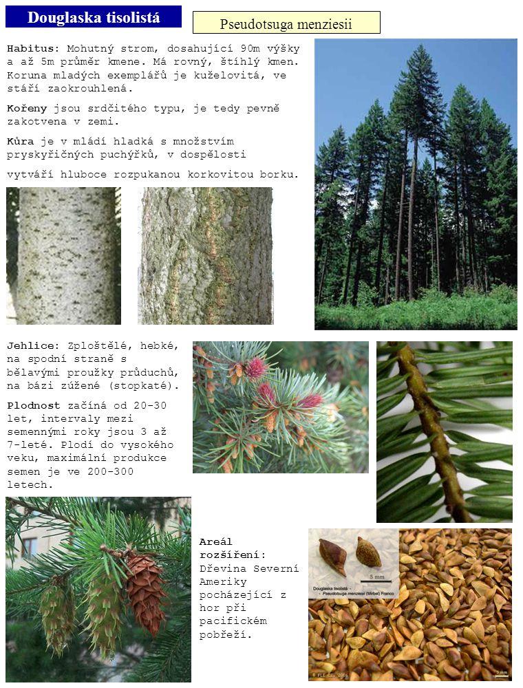 Douglaska tisolistá Pseudotsuga menziesii Habitus: Mohutný strom, dosahující 90m výšky a až 5m průměr kmene. Má rovný, štíhlý kmen. Koruna mladých exe