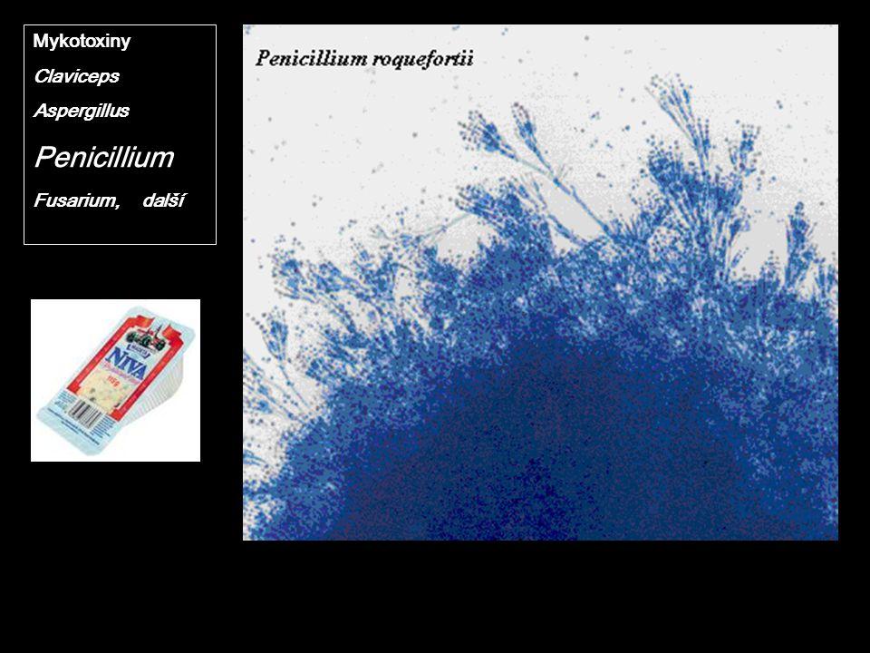 Mykotoxiny Claviceps Aspergillus Penicillium Fusarium, další