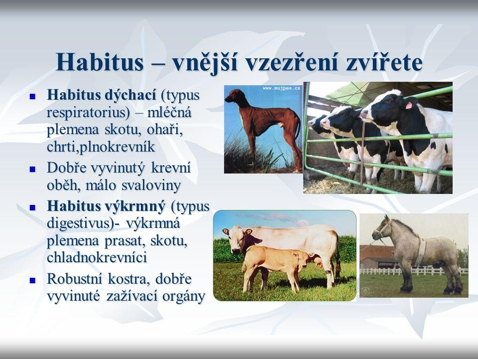 Habitus – vnější vzezření zvířete Habitus dýchací (typus respiratorius) – mléčná plemena skotu, ohaři, chrti,plnokrevník Habitus dýchací (typus respir