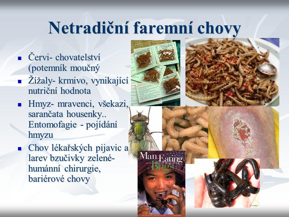 Netradiční faremní chovy Červi- chovatelství (potemník moučný Červi- chovatelství (potemník moučný Žížaly- krmivo, vynikající nutriční hodnota Žížaly-