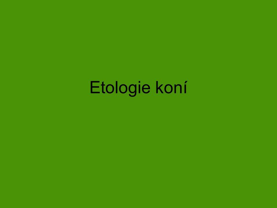 Etologie koní