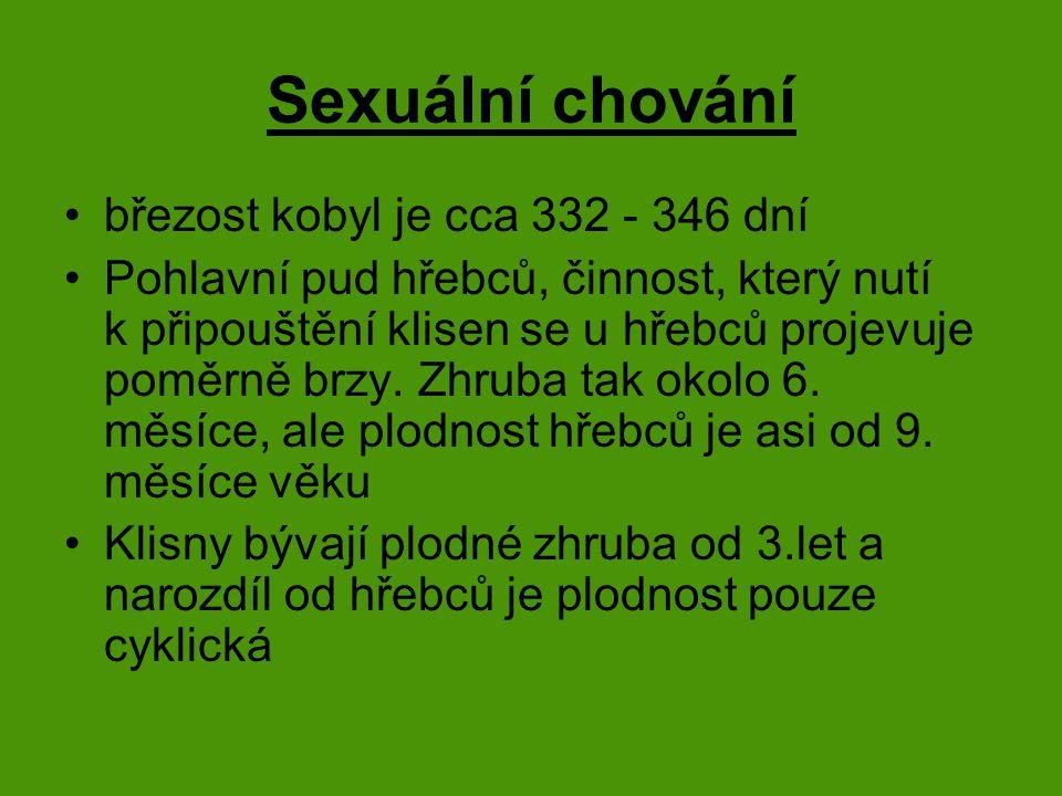 Sexuální chování březost kobyl je cca 332 - 346 dní Pohlavní pud hřebců, činnost, který nutí k připouštění klisen se u hřebců projevuje poměrně brzy.