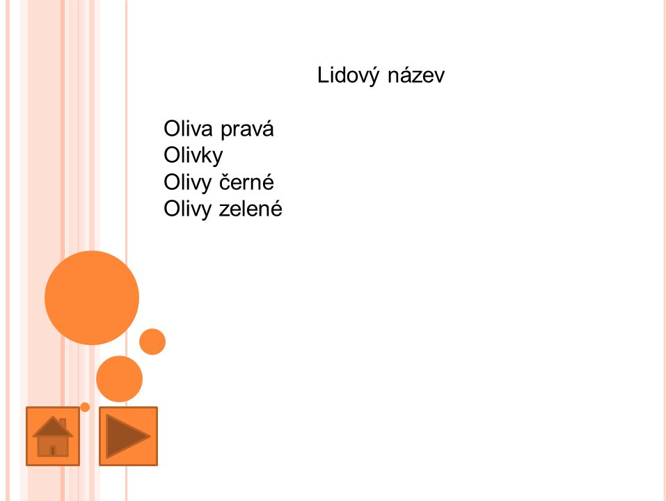 Lidový název Oliva pravá Olivky Olivy černé Olivy zelené