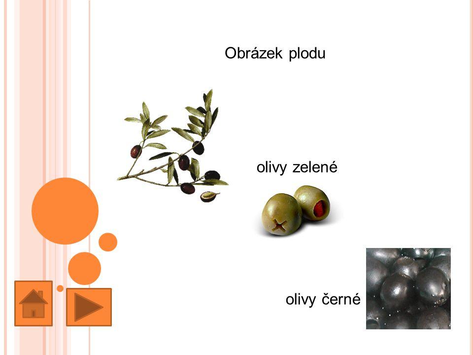 Obrázek plodu olivy zelené olivy černé