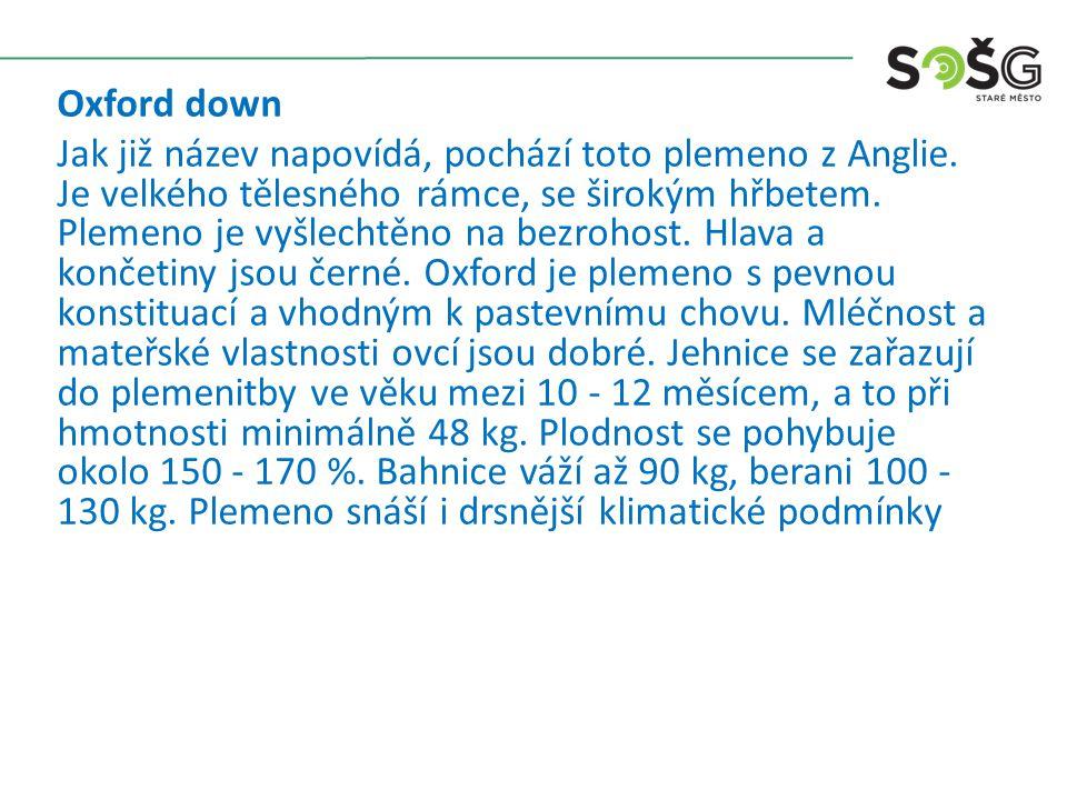 Oxford down Jak již název napovídá, pochází toto plemeno z Anglie.