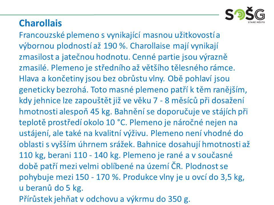 Charollais Francouzské plemeno s vynikající masnou užitkovostí a výbornou plodností až 190 %.