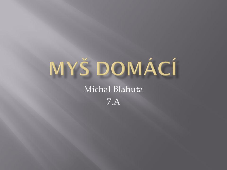 Michal Blahuta 7.A