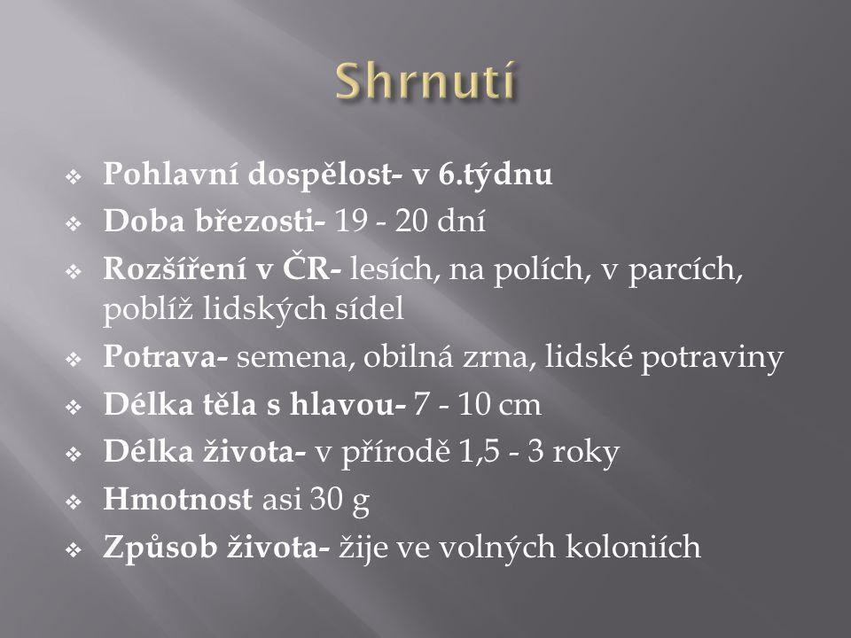  Pohlavní dospělost- v 6.týdnu  Doba březosti- 19 - 20 dní  Rozšíření v ČR- lesích, na polích, v parcích, poblíž lidských sídel  Potrava- semena,