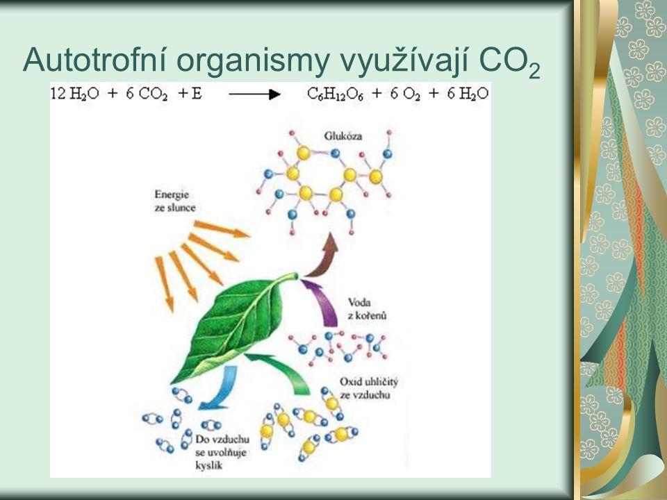 Autotrofní organismy využívají CO 2