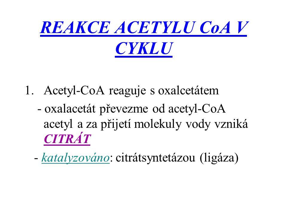 REAKCE ACETYLU CoA V CYKLU 1.Acetyl-CoA reaguje s oxalcetátem - oxalacetát převezme od acetyl-CoA acetyl a za přijetí molekuly vody vzniká CITRÁT - ka