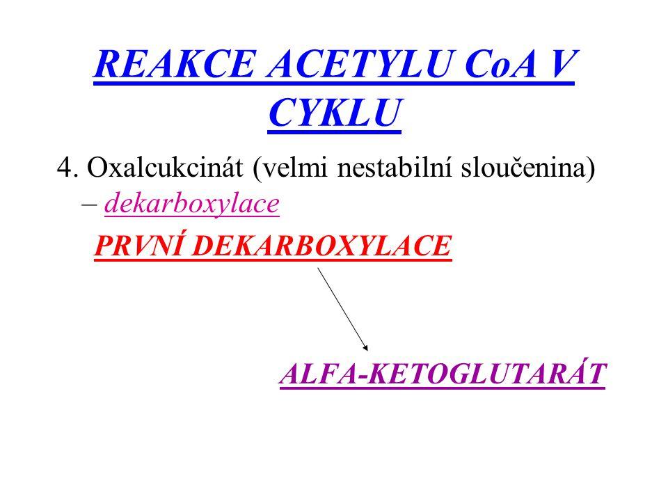 REAKCE ACETYLU CoA V CYKLU 4. Oxalcukcinát (velmi nestabilní sloučenina) – dekarboxylace PRVNÍ DEKARBOXYLACE ALFA-KETOGLUTARÁT