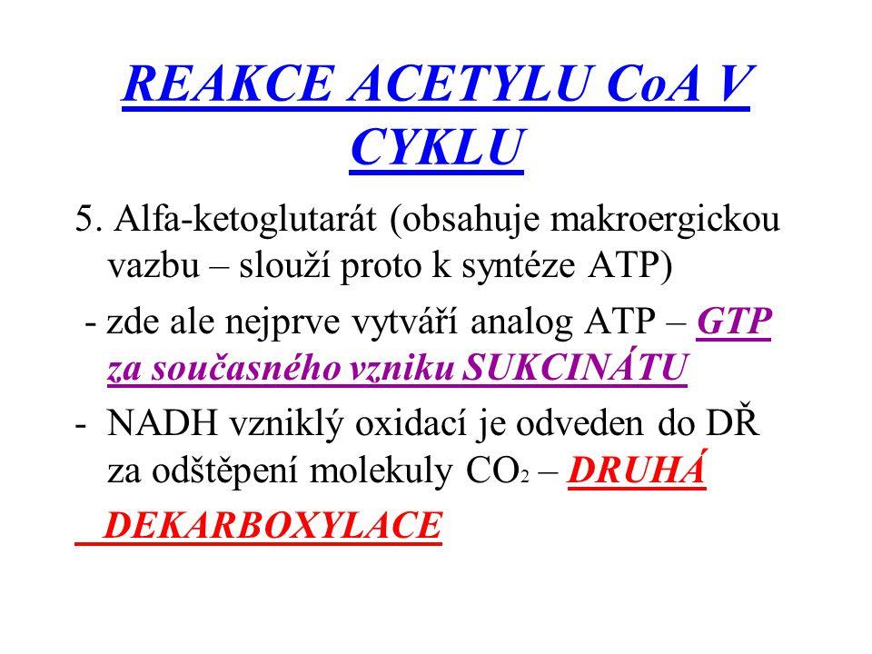 REAKCE ACETYLU CoA V CYKLU 5. Alfa-ketoglutarát (obsahuje makroergickou vazbu – slouží proto k syntéze ATP) - zde ale nejprve vytváří analog ATP – GTP