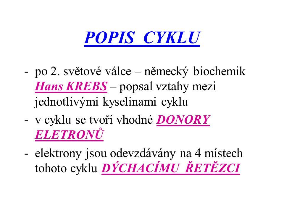POPIS CYKLU -po 2. světové válce – německý biochemik Hans KREBS – popsal vztahy mezi jednotlivými kyselinami cyklu -v cyklu se tvoří vhodné DONORY ELE