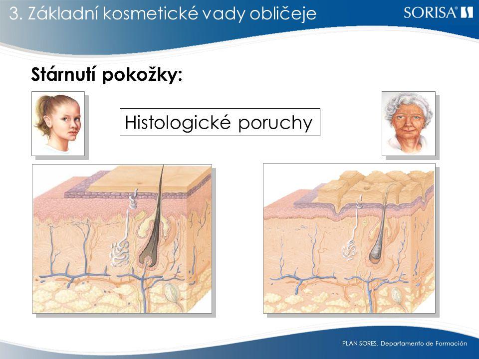 PLAN SORES.Departamento de Formación Stárnutí pokožky: Histologické poruchy 3.