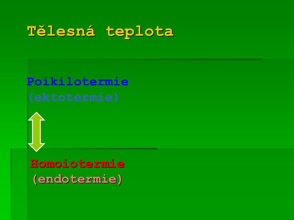 """Adaptace na chlad  Hypothalamus → produkce """"Thyrotropin Releasing Hormone  Adenohypofýza → produkce """"Thyroid Stimulating Hormone  Štítná žláza → produkce thyroxinu a trijodtyroninu  Tělo → zvýšení intenzity metabolizmu  Zvýšení tělesné teploty"""