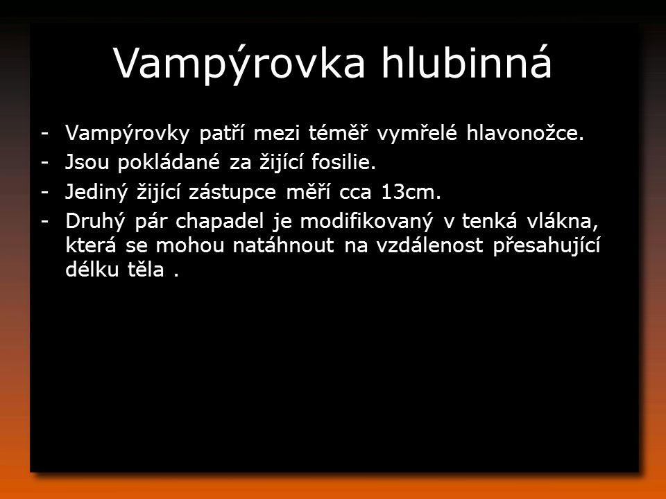 Vampýrovka hlubinná -Vampýrovky patří mezi téměř vymřelé hlavonožce. -Jsou pokládané za žijící fosilie. -Jediný žijící zástupce měří cca 13cm. -Druhý