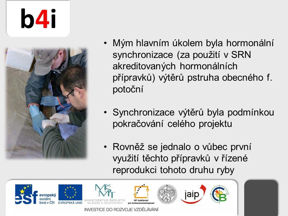 b4ib4i Mým hlavním úkolem byla hormonální synchronizace (za použití v SRN akreditovaných hormonálních přípravků) výtěrů pstruha obecného f. potoční Sy