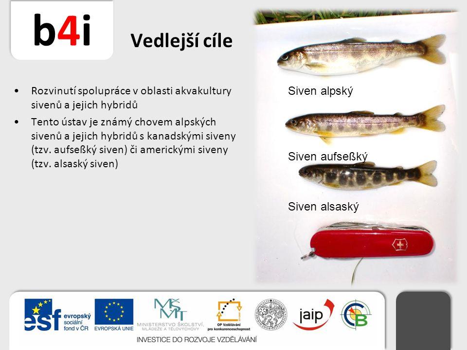 b4ib4i Vedlejší cíle Rozvinutí spolupráce v oblasti akvakultury sivenů a jejich hybridů Tento ústav je známý chovem alpských sivenů a jejich hybridů s