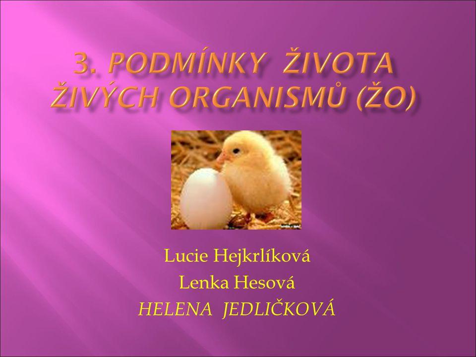 Lucie Hejkrlíková Lenka Hesová HELENA JEDLIČKOVÁ