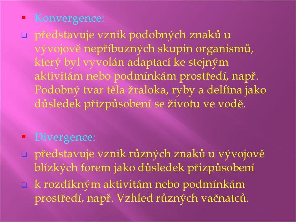  Konvergence:  představuje vznik podobných znaků u vývojově nepříbuzných skupin organismů, který byl vyvolán adaptací ke stejným aktivitám nebo podm