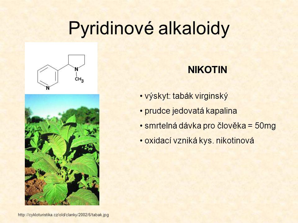 Piperidinové alkaloidy KONIIN http://www.iabc.cz/images/imgdb/original/phpthAl8Y.jpg výskyt: bolehlav plamatý silně těkavý alkaloid blokuje smyslové i motorické neurony smrt nastává v důsledku obrny dýchacích svalů otravu popsal Platón, žák Sokratův