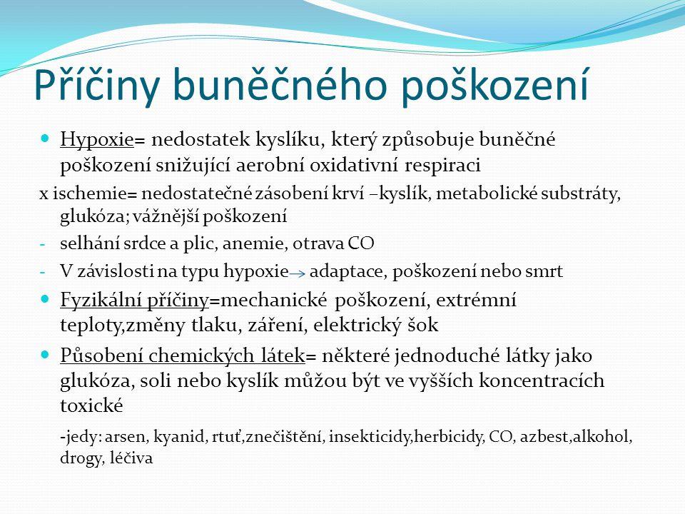 Příčiny buněčného poškození Hypoxie= nedostatek kyslíku, který způsobuje buněčné poškození snižující aerobní oxidativní respiraci x ischemie= nedostat