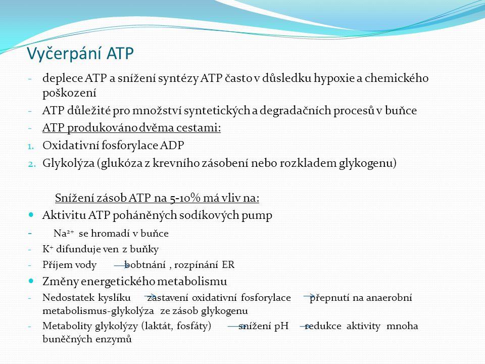 Vyčerpání ATP - deplece ATP a snížení syntézy ATP často v důsledku hypoxie a chemického poškození - ATP důležité pro množství syntetických a degradačn