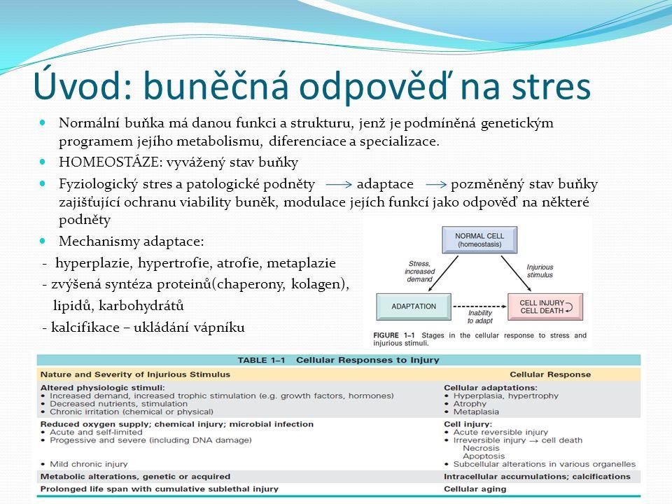 Úvod: buněčná odpověď na stres Normální buňka má danou funkci a strukturu, jenž je podmíněná genetickým programem jejího metabolismu, diferenciace a s