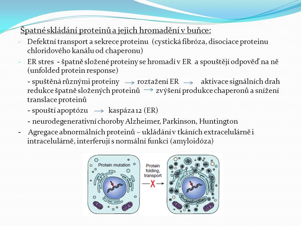 Špatné skládání proteinů a jejich hromadění v buňce: - Defektní transport a sekrece proteinu (cystická fibróza, disociace proteinu chloridového kanálu