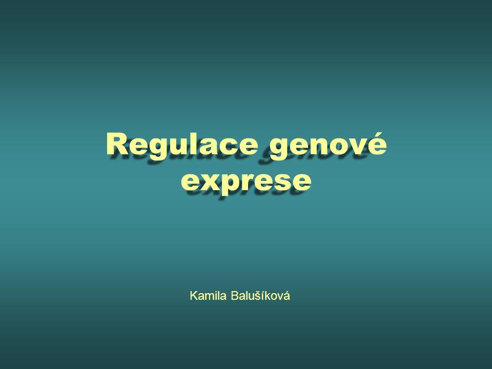 Regulace genové exprese Kamila Balušíková