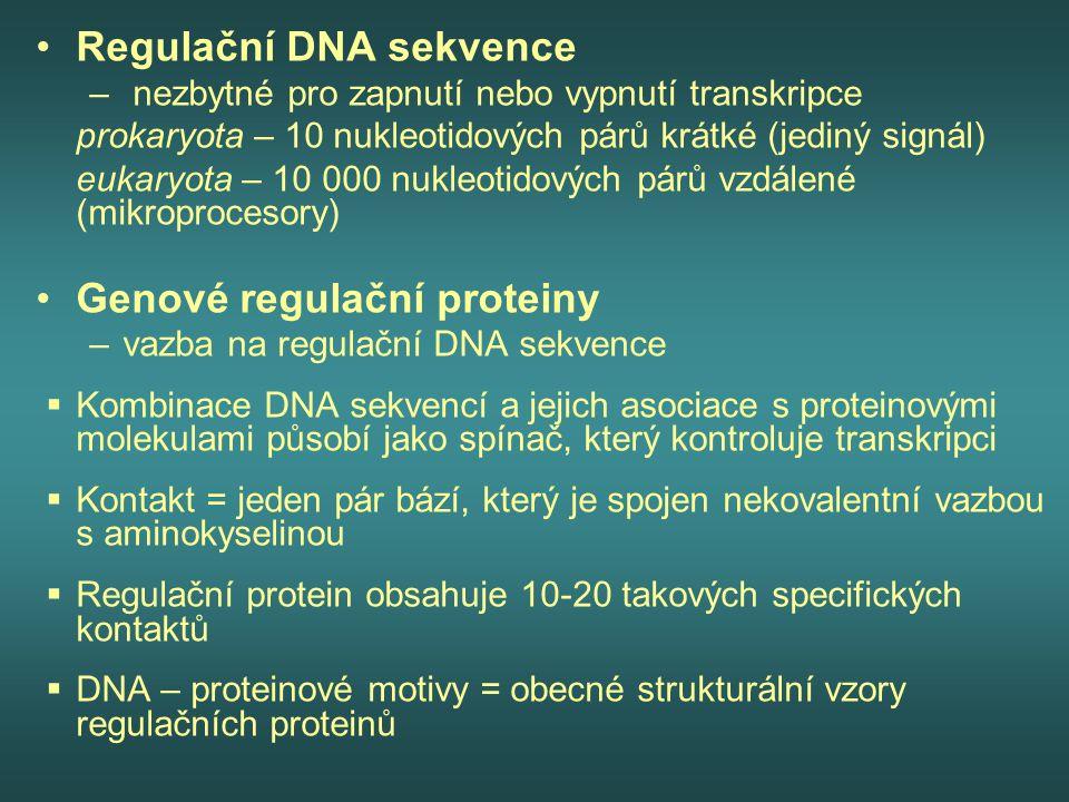Regulační DNA sekvence – nezbytné pro zapnutí nebo vypnutí transkripce prokaryota – 10 nukleotidových párů krátké (jediný signál) eukaryota – 10 000 n