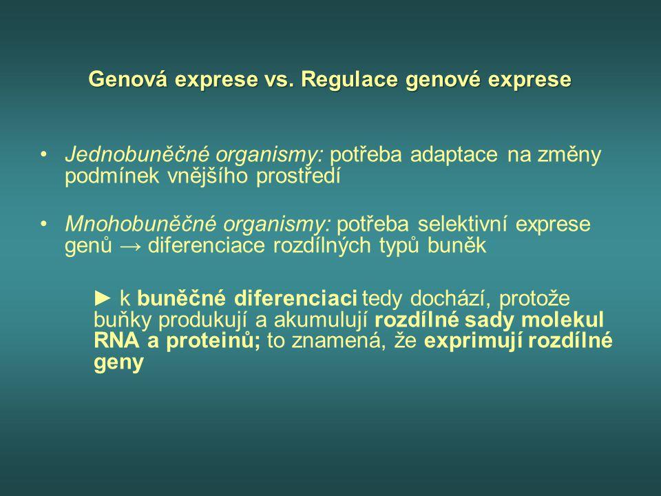 """Regulace transkripce u prokaryot OPERON – transkripční jednotka, sada genů na chromozomu, které jsou regulovány jedním promotorem a operátorem, jsou transkribovány jako jedno dlouhé mRNA vlákno –1 mRNA (nese více genů) = 1 transkripční jednotka –polycistronový transkript PROMOTOR – iniciační místo, kde transkripce skutečně začíná, """"upstream oblast, sekvence vázající RNA polymerasu"""