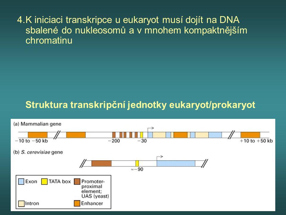4.K iniciaci transkripce u eukaryot musí dojít na DNA sbalené do nukleosomů a v mnohem kompaktnějším chromatinu Struktura transkripční jednotky eukary