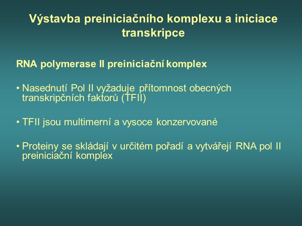 Výstavba preiniciačního komplexu a iniciace transkripce RNA polymerase II preiniciační komplex Nasednutí Pol II vyžaduje přítomnost obecných transkrip