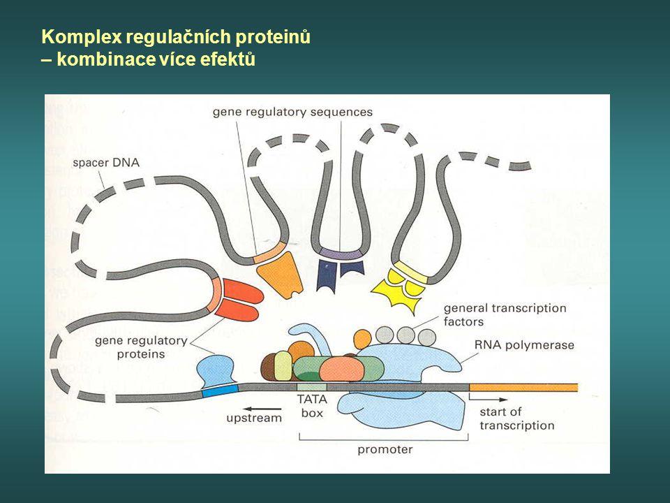 Komplex regulačních proteinů – kombinace více efektů