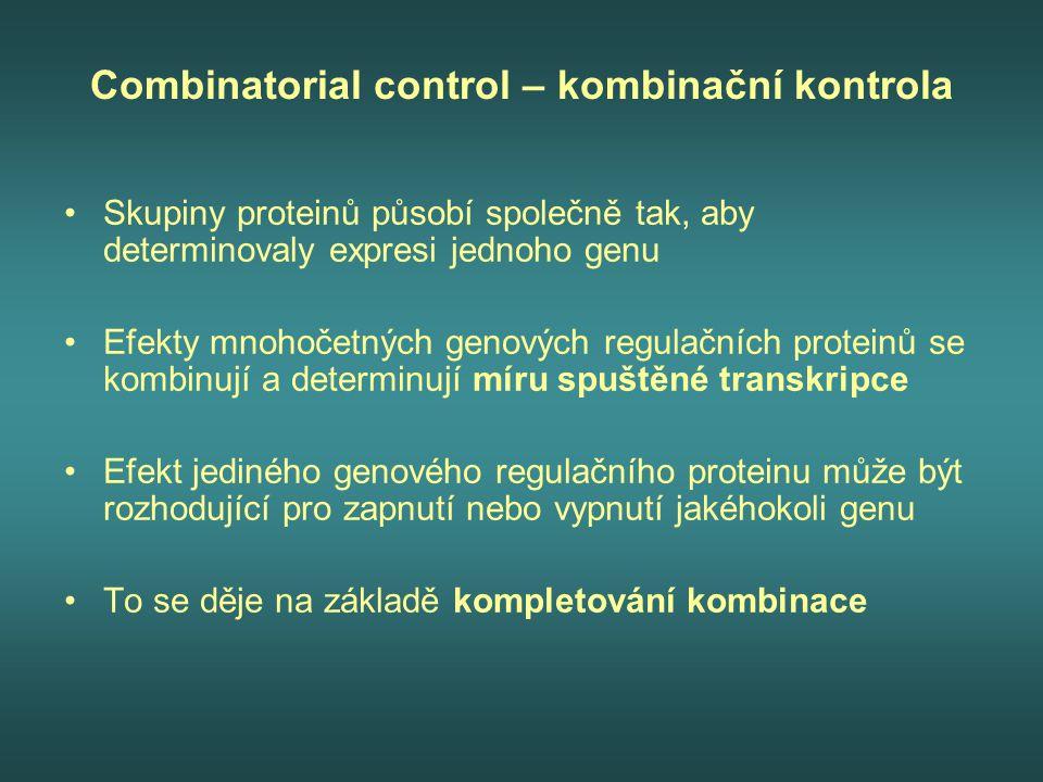 Combinatorial control – kombinační kontrola Skupiny proteinů působí společně tak, aby determinovaly expresi jednoho genu Efekty mnohočetných genových