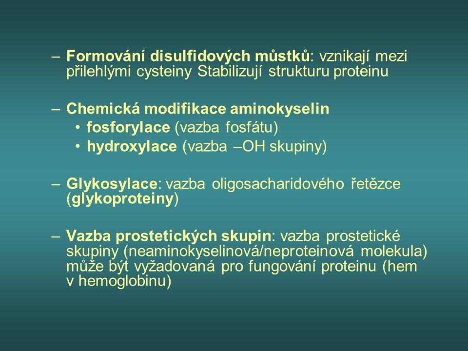 –Formování disulfidových můstků: vznikají mezi přilehlými cysteiny Stabilizují strukturu proteinu –Chemická modifikace aminokyselin fosforylace (vazba