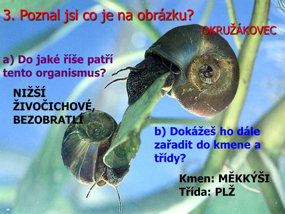 3. Poznal jsi co je na obrázku. a) Do jaké říše patří tento organismus.
