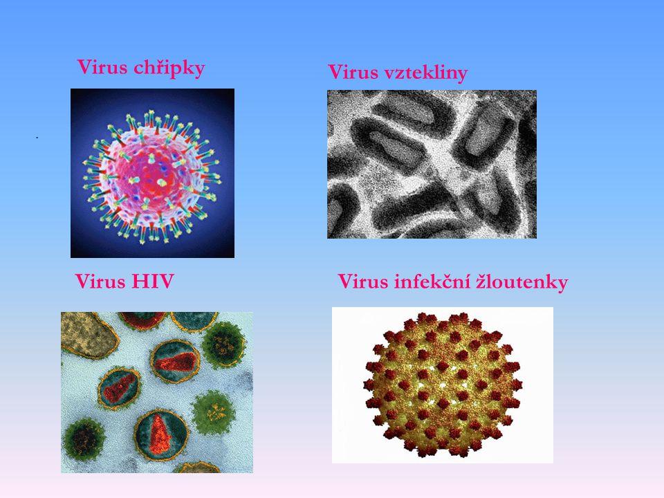 . Virus chřipky Virus HIV Virus vztekliny Virus infekční žloutenky