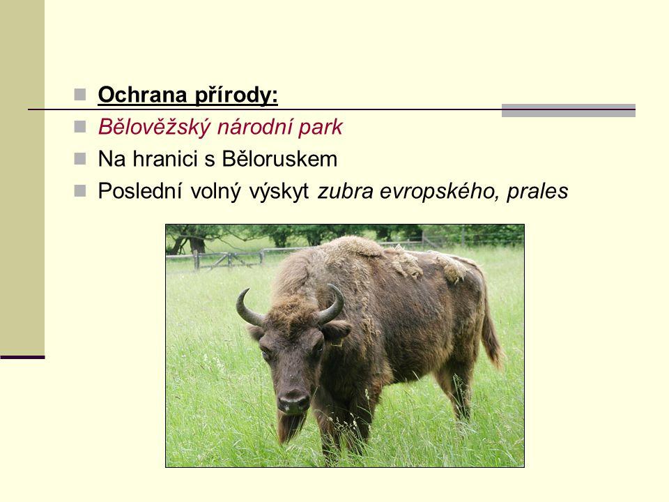 Ochrana přírody: Bělověžský národní park Na hranici s Běloruskem Poslední volný výskyt zubra evropského, prales