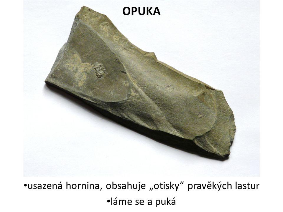 """OPUKA usazená hornina, obsahuje """"otisky"""" pravěkých lastur láme se a puká"""
