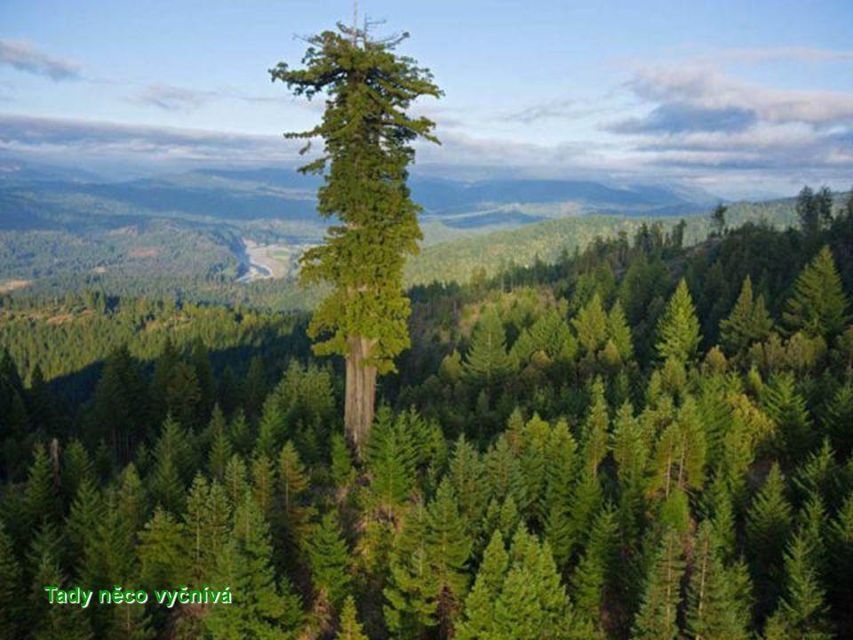Jezírko v přírodní rezervaci