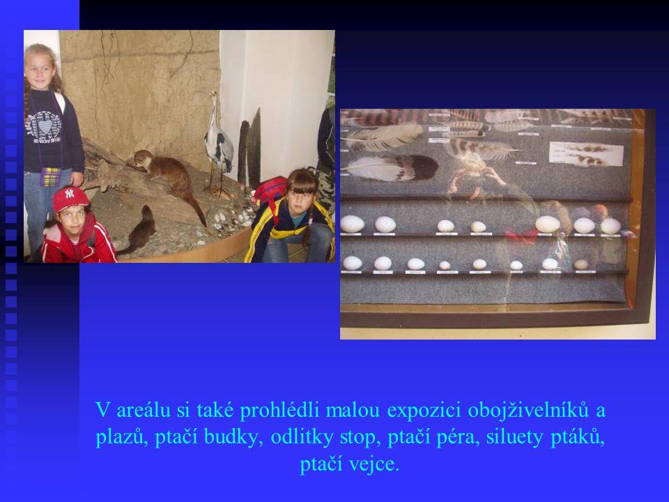 V areálu si také prohlédli malou expozici obojživelníků a plazů, ptačí budky, odlitky stop, ptačí péra, siluety ptáků, ptačí vejce.