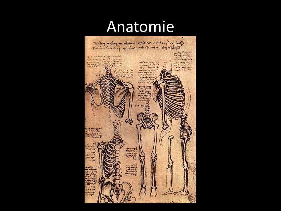 Popiš lidskou kostru a svalstvo. Nakresli lidskou ruku, část těla.