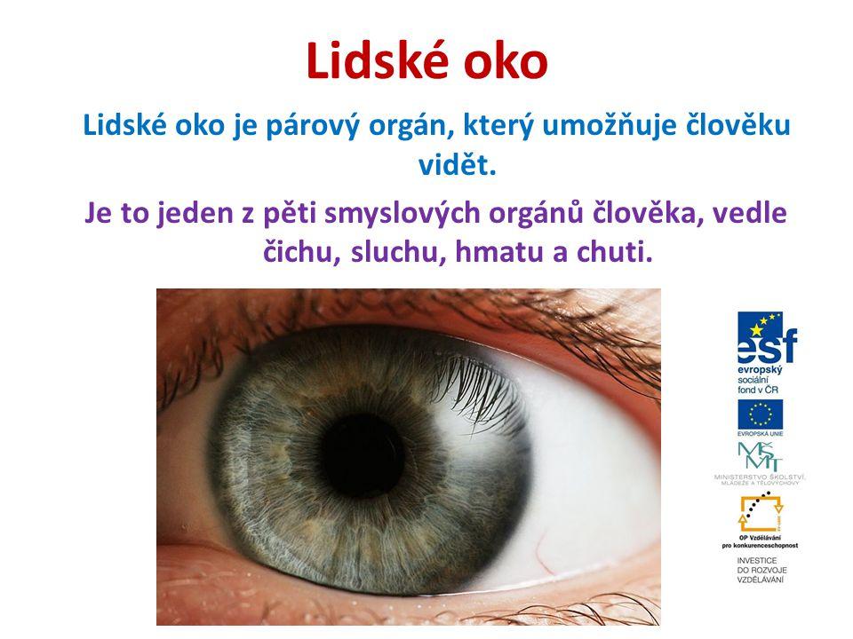 Oko Oko je smyslový orgán který reaguje na světlo.