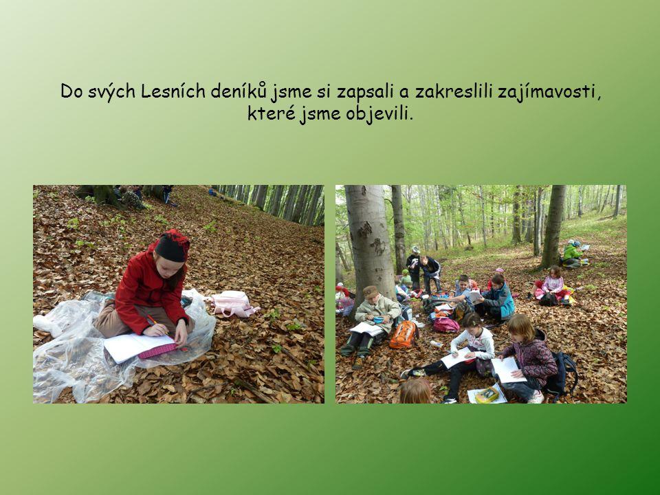 Do svých Lesních deníků jsme si zapsali a zakreslili zajímavosti, které jsme objevili.