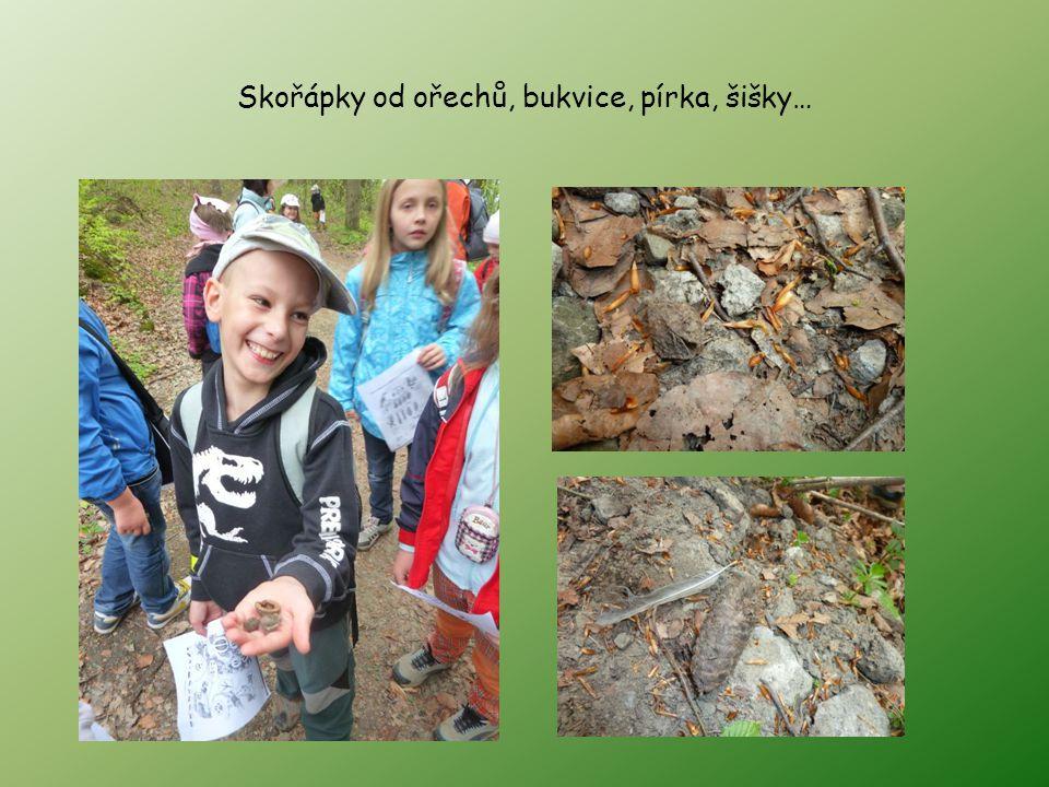 Skořápky od ořechů, bukvice, pírka, šišky…