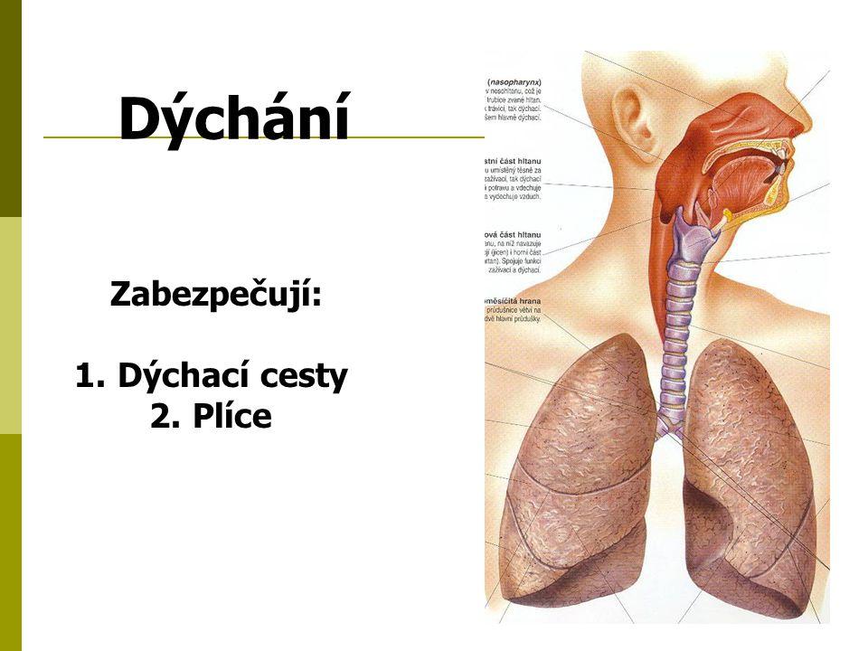 Zabezpečují: 1.Dýchací cesty 2.Plíce Dýchání